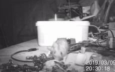 Nhà kho được dọn dẹp gọn gàng sau mỗi đêm, người đàn ông đặt camera và phát hiện điều bất ngờ
