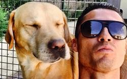 Ronaldo gửi quà quý, cứu vớt cuộc đời 80 chú chó