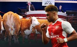 Oxlade-Chamberlain đến Liverpool: Trọng lượng con bò và trí tuệ đám đông