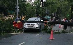 Sài Gòn mưa trắng trời ngày thứ 3 liên tiếp, cây đổ đè ô tô
