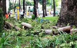 Cụ bà bị cành cây trong công viên Tao Đàn rơi trúng đã tử vong