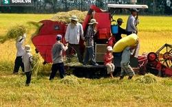 Hi hữu: Xuống ruộng vơ rơm, người phụ nữ bị máy tuốt lúa cán tử vong