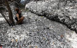 Chùm ảnh: Hiện tượng lạ khiến 1 loài cá bất ngờ chết hàng loạt tại 4 quốc gia