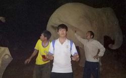 Video: Voi rừng xuống lán vui đùa với nhóm công nhân trong đêm