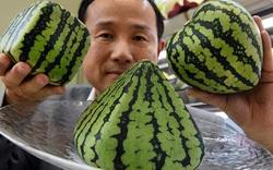 Không phải túi hàng hiệu, trái cây mới là mặt hàng xa xỉ trong mắt người Nhật