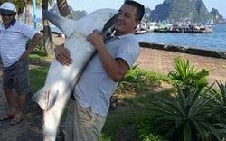 """Người """"câu được cá mập ở vịnh Hạ Long"""": Phải ghì chặt và mất 2 giờ đưa cá lên thuyền"""