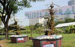Cặp khế kiểng được rao bán giá 12 tỷ tại chợ hoa Sài Gòn