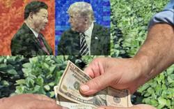 """Chiến tranh thương mại Mỹ-Trung: Món quà bất ngờ, Nga nhanh tay chìa đất """"hứng tiền"""" từ TQ"""