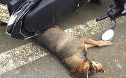 Chó vô chủ lao vào chợ cắn nhiều người bị thương, cả chợ náo loạn