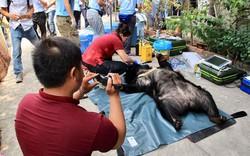 6 cá thể gấu nuôi nhốt hơn 10 năm tại nhà người dân ở Bình Dương được giải cứu
