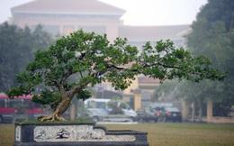 Những cây cảnh 'độc' trưng bày dịp Tết