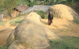 Những con rùa đá kỳ lạ ở Sơn La