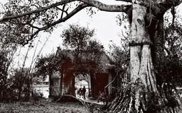 Những tấm ảnh đen trắng giàu cảm xúc về làng quê Việt Nam