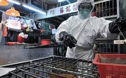 Cúm A/H7N9: Nguy cơ bùng phát thành đại dịch
