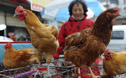 Phát hiện mới về virus cúm A/H7N9
