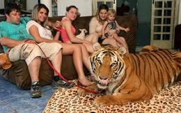 Cả gia đình nuôi 7 chú hổ dữ làm thú cưng