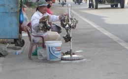Tiền Giang: Cúm A/H5N1 tấn công chim cút