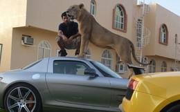 """Giới nhà giàu Ả rập và thú nuôi sư tử """"sang chảnh"""""""