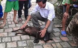 Chó đực đẻ con, chuyện chưa từng có ở Việt Nam