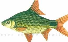 7 loại cá có thể gây ung thư gan