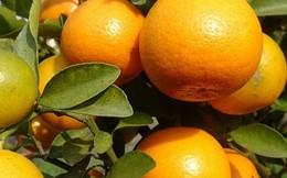 Các vị thuốc tốt cho tiêu hóa từ cây quả vườn nhà