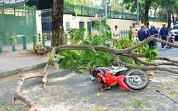 Tai nạn hi hữu: Trời lặng gió, cây gãy đè trúng 2 cô gái đi đường