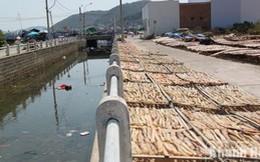 Hải sản khô: Rửa nước sông nổi rác, phơi ruồi nhặng bu đen
