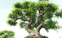 Chiêm ngưỡng vườn cây 'để đời' của Trung tướng về hưu