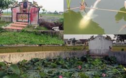 Nghệ An: Xôn xao cá lạ chỉ bơi ngửa giữa giếng cổ Tiên Hồ