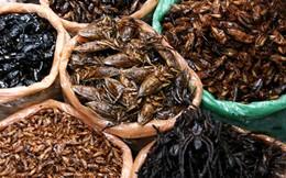 """Đi chợ côn trùng xem quý ông Việt săn tìm """"tiên dược phòng the"""""""