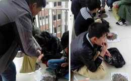 Giáo viên kỷ luật học sinh bằng cách bắt ăn 50kg hạt hướng dương