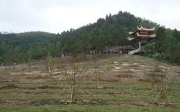 Cận cảnh vườn mai 103 cây tại nơi an nghỉ của Đại tướng