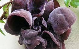 Mộc nhĩ: Vị thuốc giải độc cực quý trong thời ô nhiễm