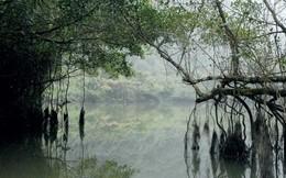 Bí ẩn cây si nghìn tuổi ở Tràng An