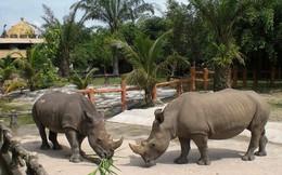 """""""Đột nhập"""" vườn thú quý hiếm vừa đóng cửa của đại gia Huỳnh Uy Dũng"""