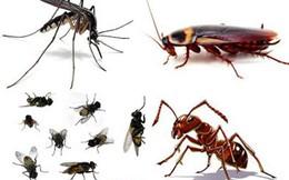 """Mẹo khiến ruồi, muỗi, gián, chuột phải chạy ra khỏi nhà """"tức tốc"""""""