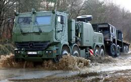 Bò rừng Bison tái xuất trong Quân đội Đức