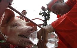 Kiên quyết không để tục chém lợn tái diễn trong năm 2016