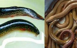 Những người không nên ăn lươn, chạch