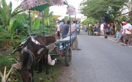 'Định tội' con ngựa bất kham gây tai nạn hy hữu ở Tiền Giang