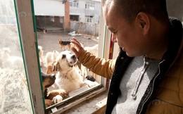 Triệu phú Trung Quốc phá sản vì nuôi hàng nghìn chú chó