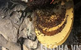 """""""Đột nhập"""" tổ ong kỳ lạ đáng giá cả gia tài không ai dám trộm"""
