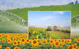 Tầm vóc của trang trại Việt Nam đón nhận kỷ lục châu Á