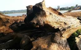 """Vớt được gỗ quý ngàn năm liền bị bắt vì """"ăn cắp tài sản quốc gia"""""""