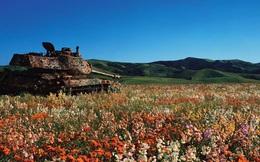 """Có thể đây mới là những hình ảnh đẹp nhất về """"cỗ máy chiến tranh"""""""