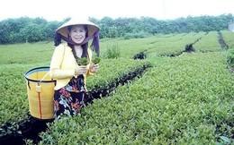 Vụ doanh nhân Hà Linh bị sát hại: Bộ Công an vào cuộc xác minh