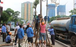 Hình ảnh trồng lại hàng cây trên con đường đẹp nhất Hà Nội