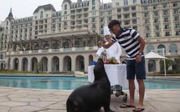 Đại gia bao cả khách sạn năm sao tổ chức sinh nhật cho sư tử biển