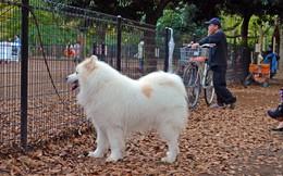 """Khuyến khích người dân chụp ảnh check in """"mìn"""" chó để giữ gìn vệ sinh"""