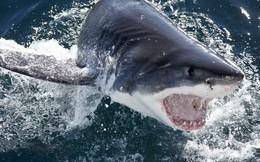 Cá mập ăn thịt người có thật ở Việt Nam
